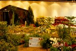 Annual Fall Flower Show
