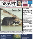 Beaver tale: hard at work