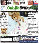 Oakville Beaver, 8 May 2013