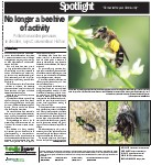 No longer a beehive of activity: pollinators under pressure, in decline, says Conservation Halton
