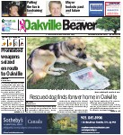 Rescued dog finds forever home in Oakville