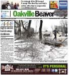Oakville Beaver2 Jan 2014