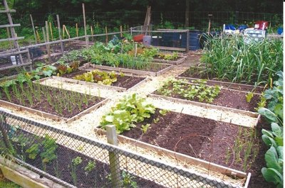 Shell Park Community Vegetable Garden