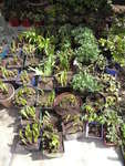 Plants ready for sale!