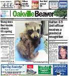 Oakville Beaver, 13 May 2016