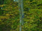 Blue Jay at Bronte Optimist Park