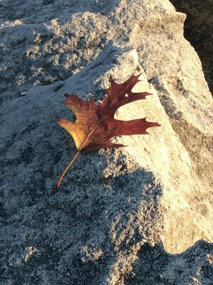 Autumn amongst the rocks